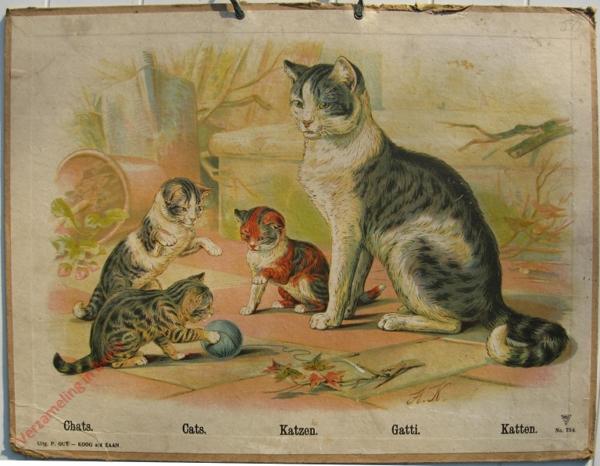 734 - Chats, Cats, Katzen, Gattim Katten